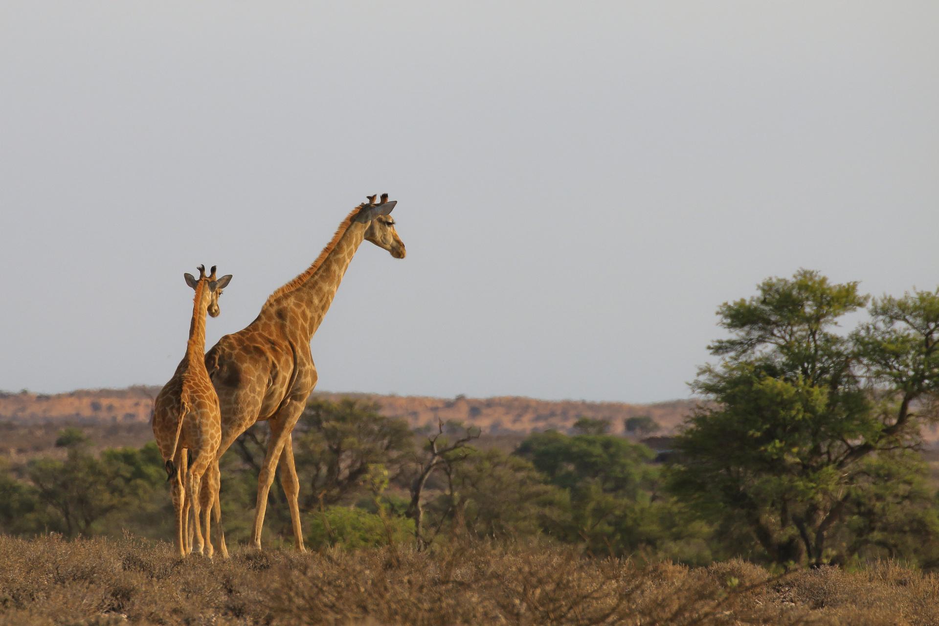 !Ae!Hai Kalahari Heritage Park