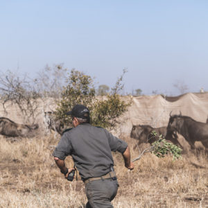 500 animals journey from Kruger to Zinave