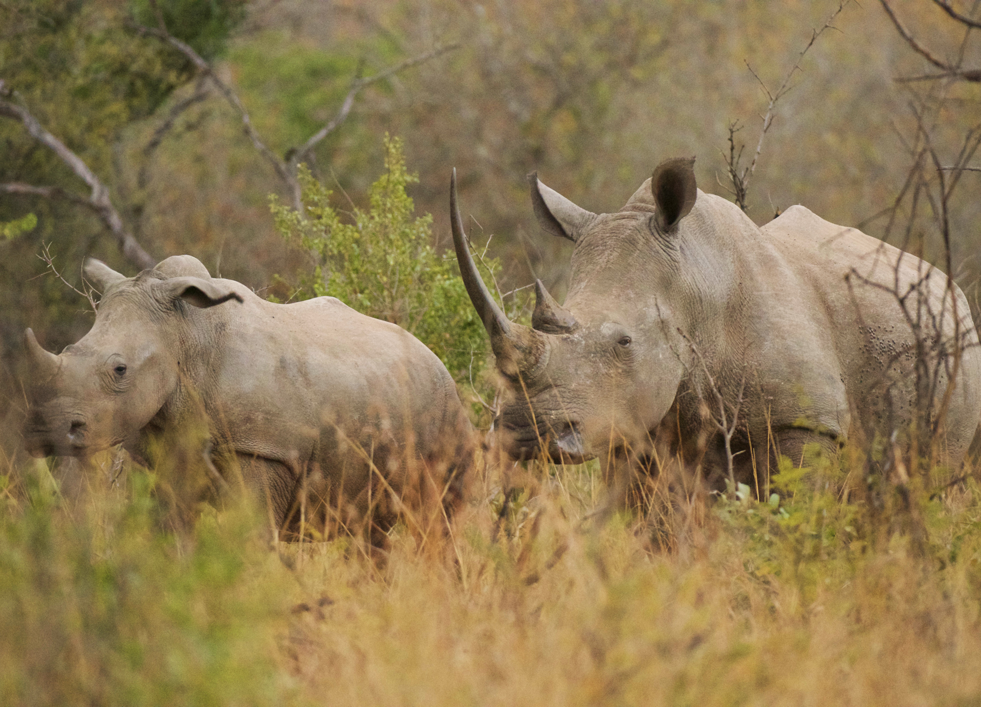Rhino Protection Programme