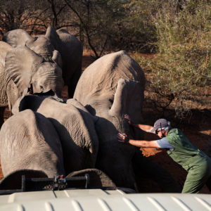 This is why we're moving 200 elephants