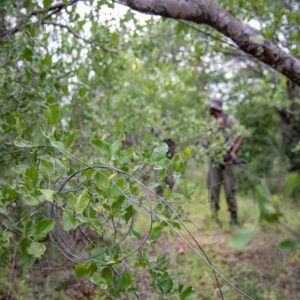 Snares - Africa's silent killer