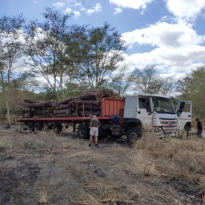 Zinave security teams uncover illegal logging operation
