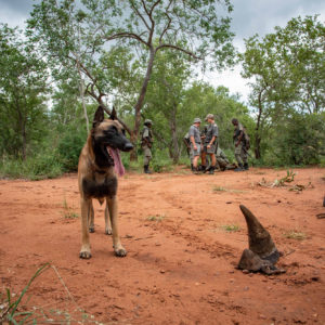 Limpopo National Park: taking a stand against wildlife crime