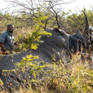 Disrupting wildlife crime with leading tech
