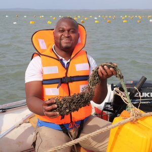 The art of farming mussels