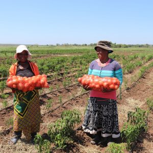 Yielding success with conservation agriculture