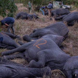 Elephants find sanctuary in Zinave