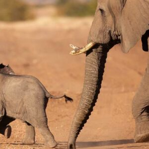 Moving Giants Program Helps Secure Future for Baby Elephants